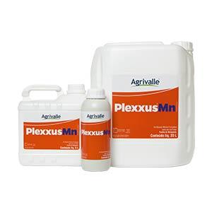 Plexxus Mn